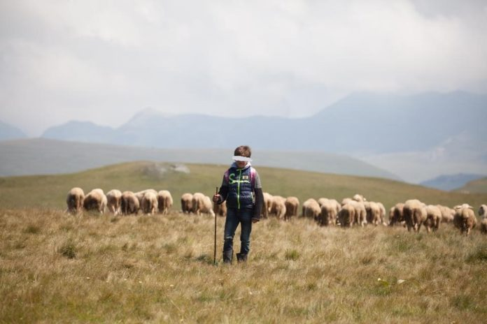 Bariu 12 vjeçar që ruan delet për 100 euro në muaj për të ushqyer familjen