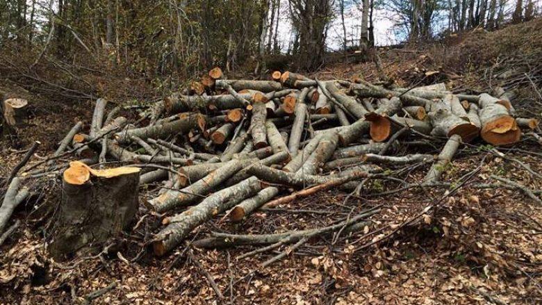 Vazhdon prerja ilegale e drunjve në Maqedoni, përforcohen kontrollet
