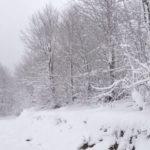 Bie bora e parë në Kroaci, Itali dhe Slloveni