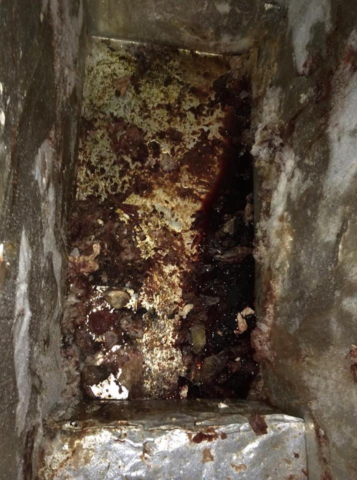 Pamje nga depoja ku po mbahej 1 mijë ton mish i prishur i lopëve, i gatshëm për t'u shitur (FOTO)