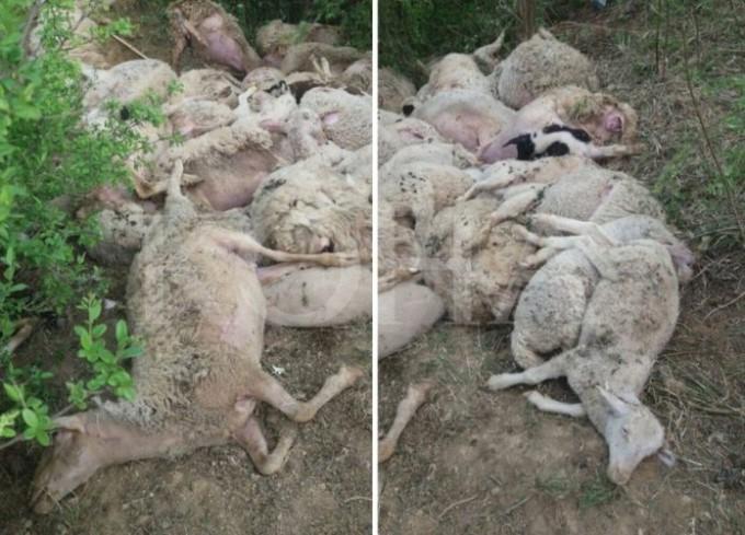 Ariu mbyt 70 dele në Lipjan të Kosovës