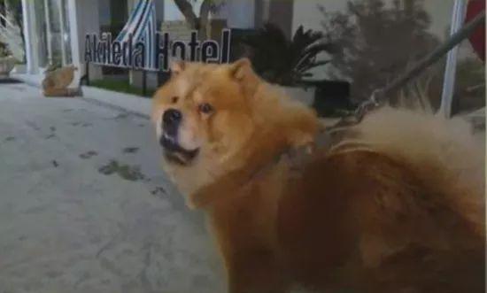 """""""Jetën na e shpëtoi qeni, na tërhoqi jorganin"""", historia e pabesueshme e çiftit nga Durrësi"""