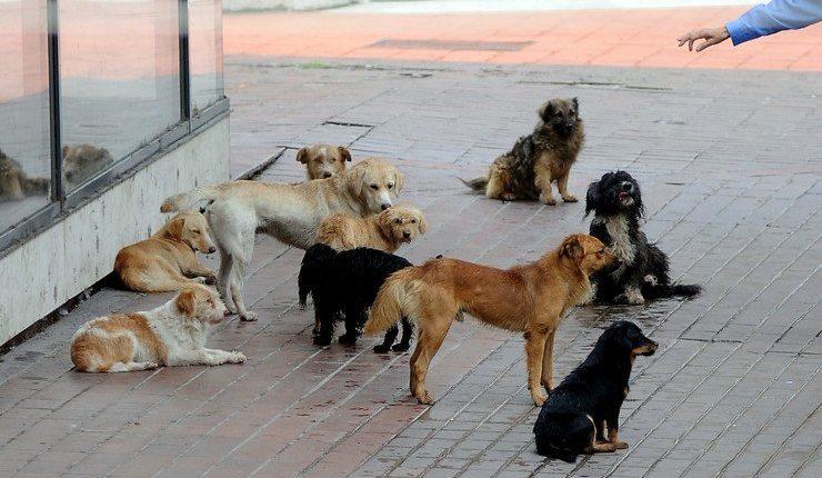 Sulmohet nga qentë e endacak 17 vjeçari nga Tetova