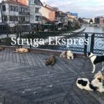 Të rrezikohesh seriozisht nga qentë endacak, në zemër të Strugës, te ura simbol (FOTO LAJM)